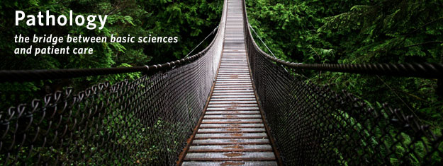 Pathology - the bridge between basic sciences and patient care